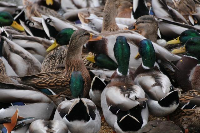 quackmire_02