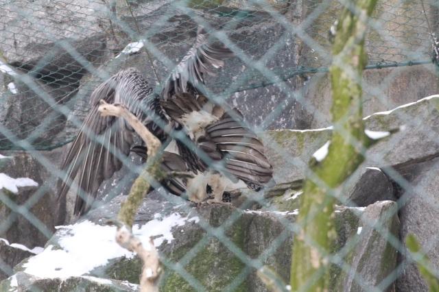 birding_13